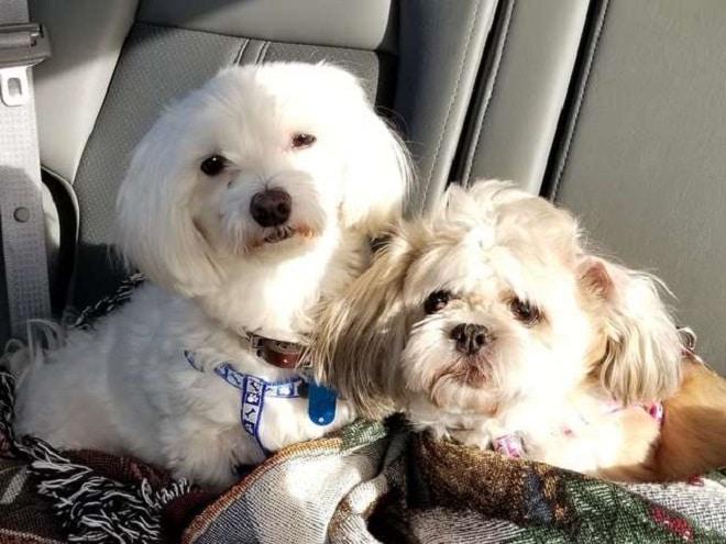 Две собака