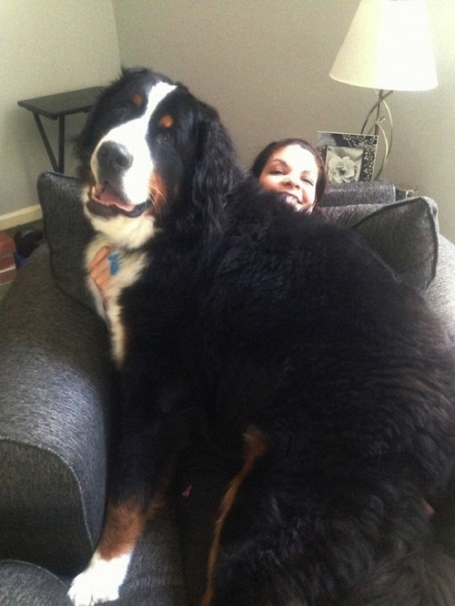 Собака легла на женщину