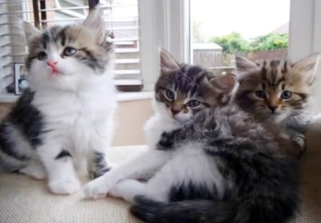Котята на подооконнике