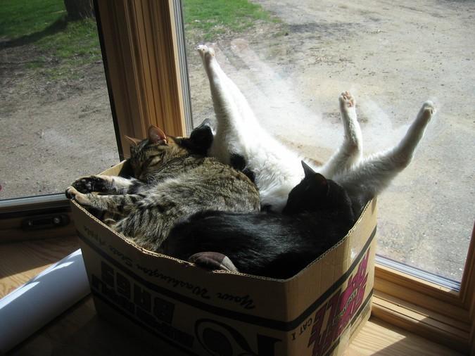 коты в коробке рис 2