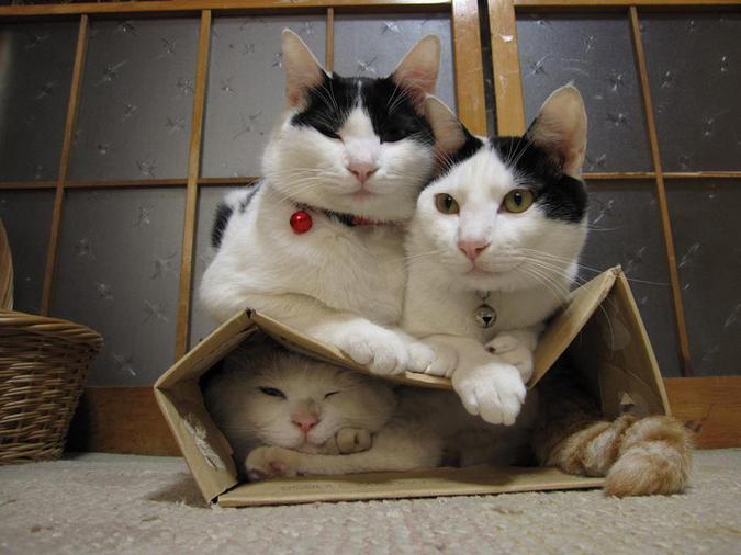 три кота и картонная коробка