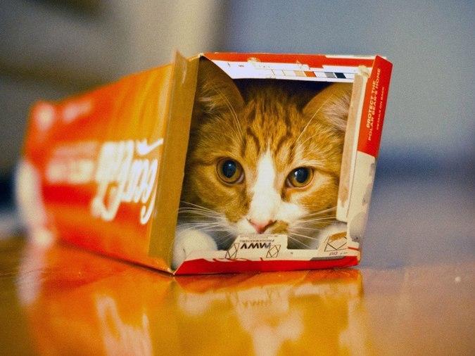 кот влез в коробку