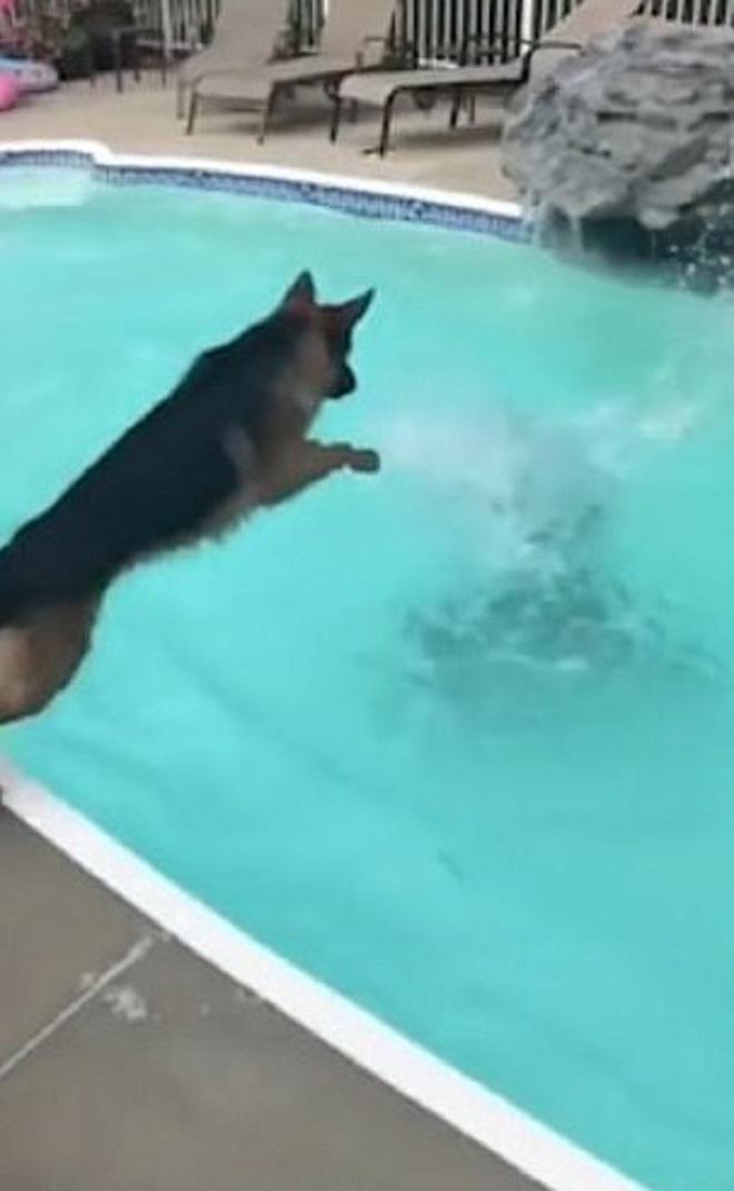 Собака прыгает в воду