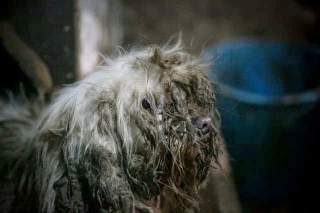 Измученный пес