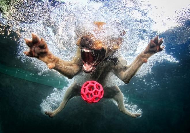 Собака и красный мяч