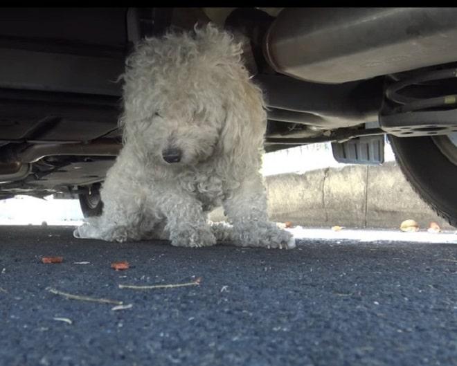Собака под машиной