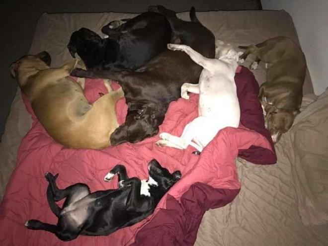 Собаки спят