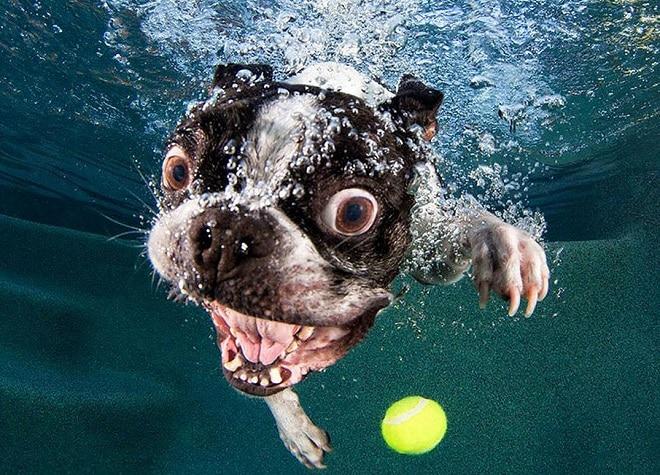 Собака с открытым ртом
