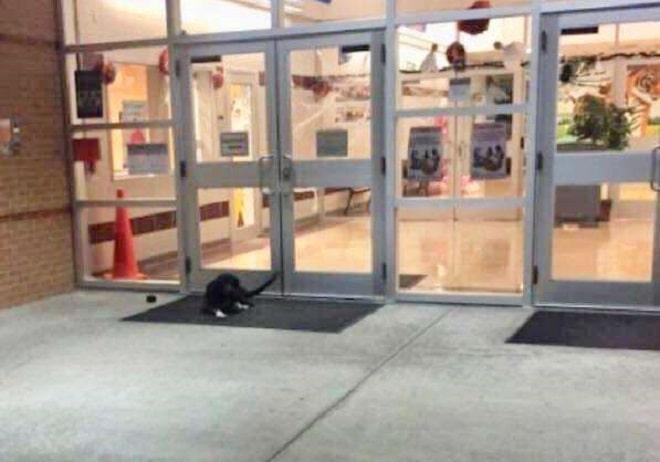 Собака у двери