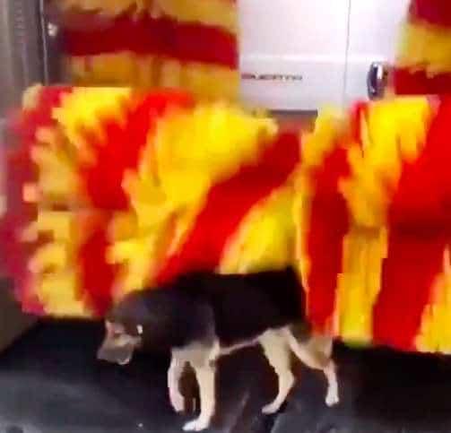 собака на автомойке рис 2