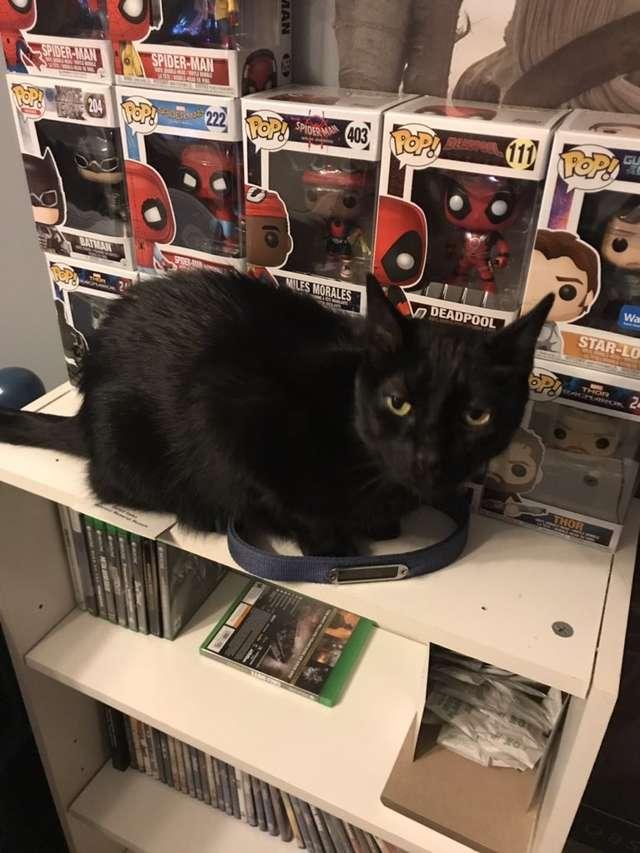 черный кот на столе