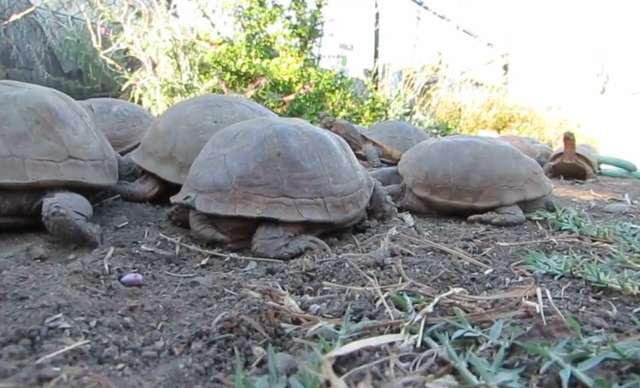 черепахи ползут по земле