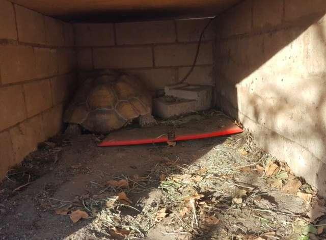спасенная черепаха