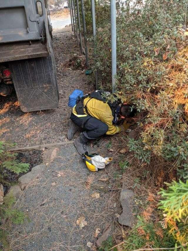 спасатель ищет кота в кустах