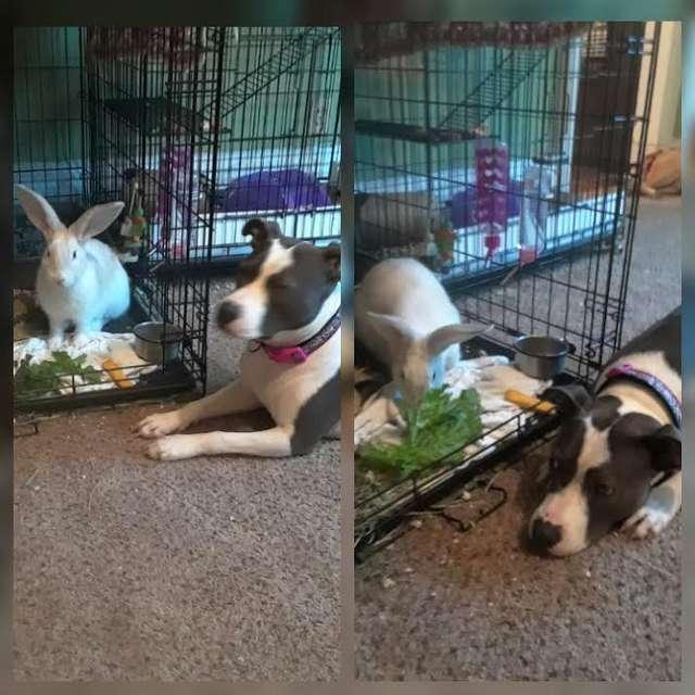 собака и кролик в доме