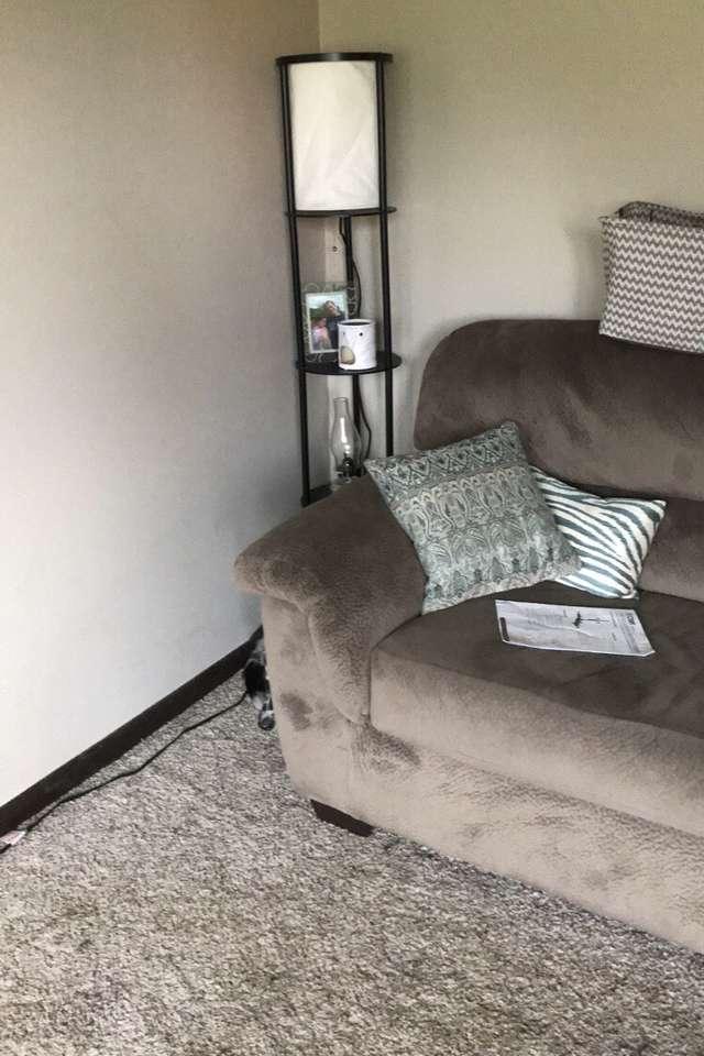 собака прячется за диваном