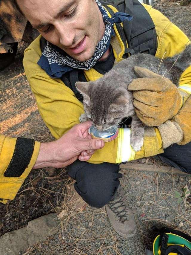 пожарный спас кота