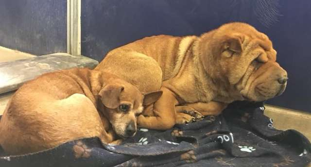 две собаки отдыхают