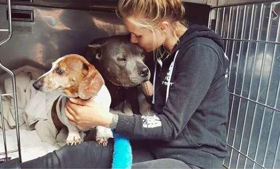 девушка и две собаки