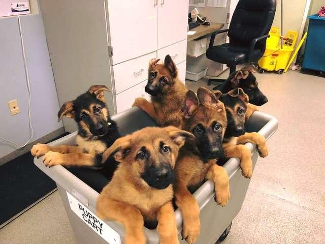 тележка со щенками