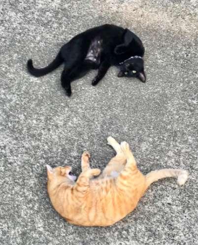черный и рыжий кот на асфальте