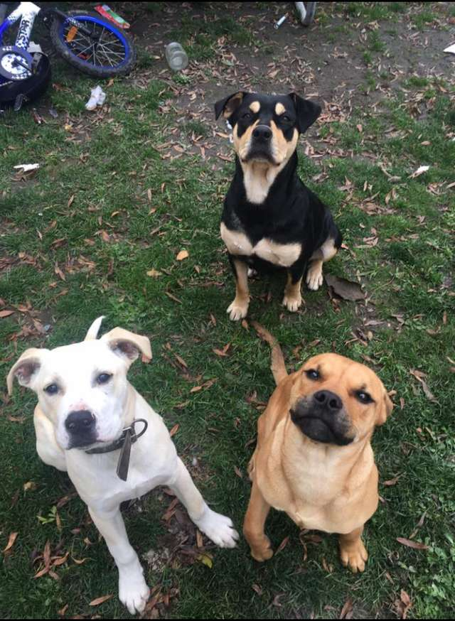 трое собак на улице