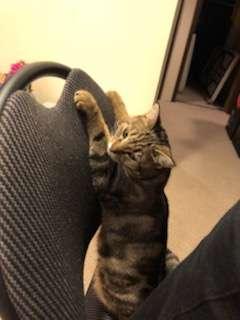 кошка стоит на стуле рис 2