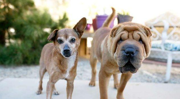 две собаки на прогулке рис 2
