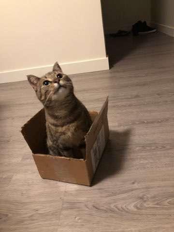 кошка сидит в коробке