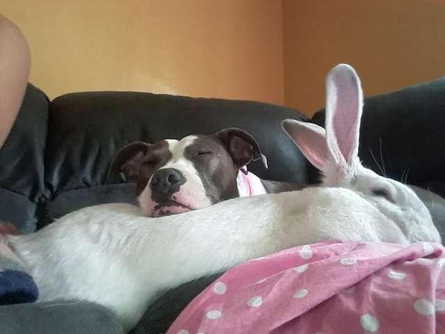 собака с кроликом на кровати