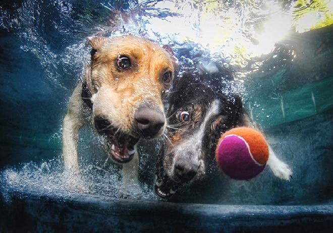Две собаки в воде