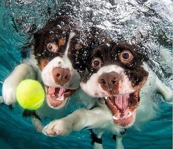 Собаки и желтый мяч