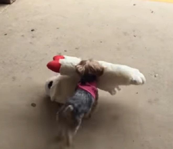 Собака несет игрушку