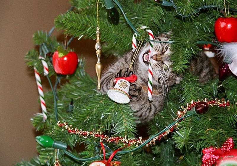 кот на елке рис 2