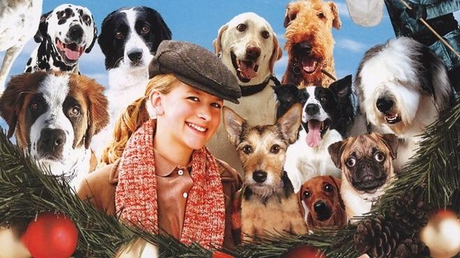 12 собак и девушка