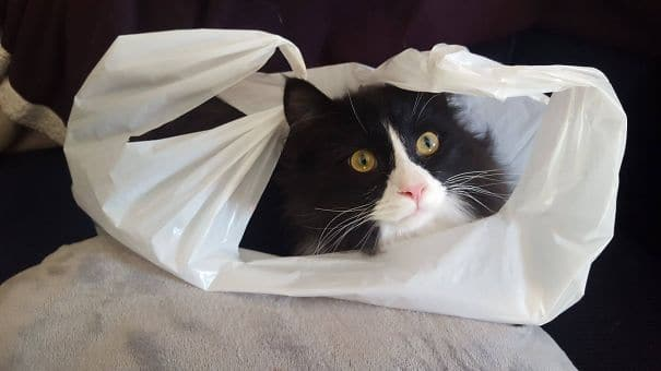 кот сидит в пакете