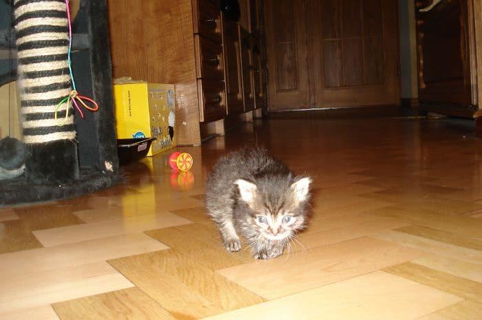 котенок на полу рис 2