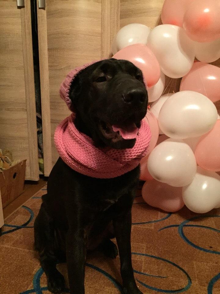 собака в шарфе