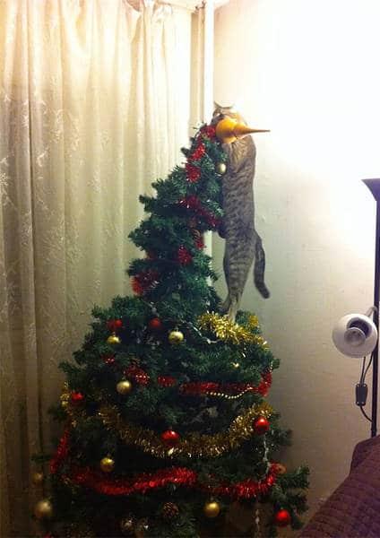 кот висит на елке