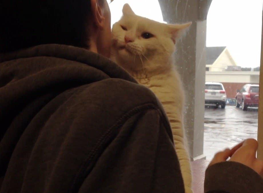 белый кот на плече
