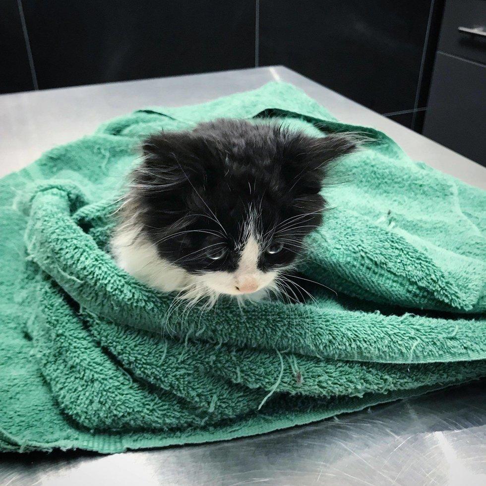 котенок в полотенце рис 2