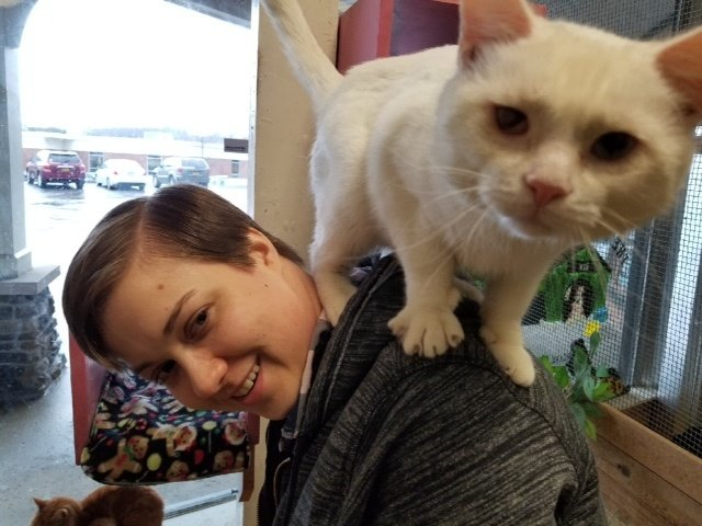 кот на плечах у хозяина