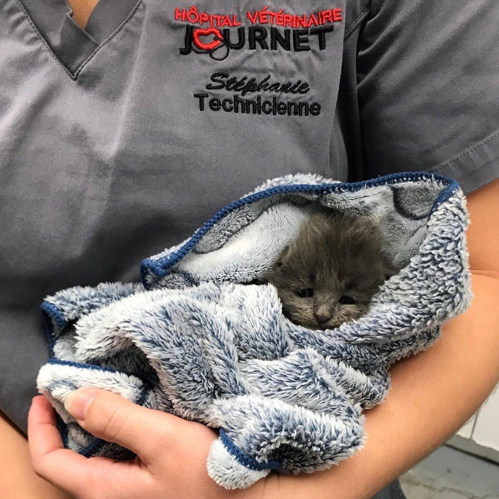 котенок в полотенце рис 3