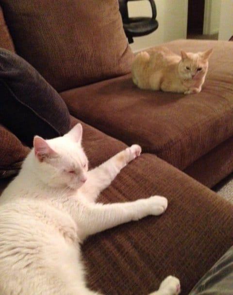 два кота на диване