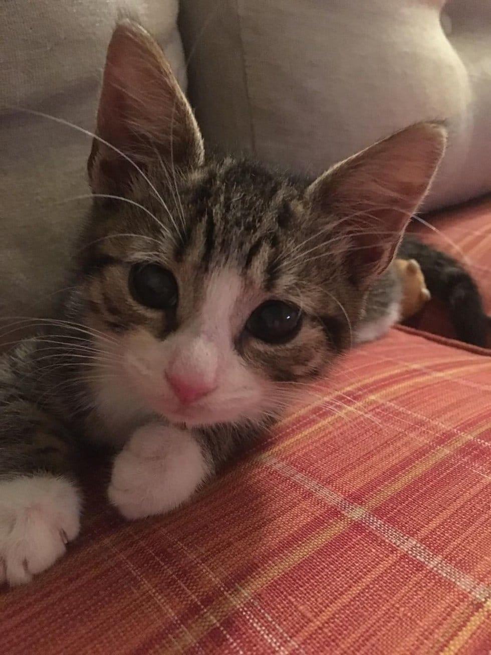 котенок на диване рис 2