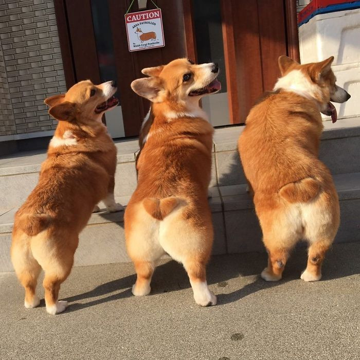 три собаки