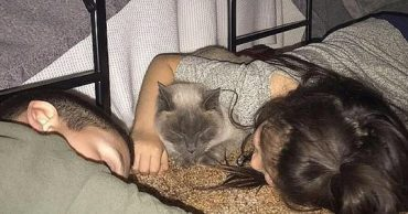 Cat and hugs