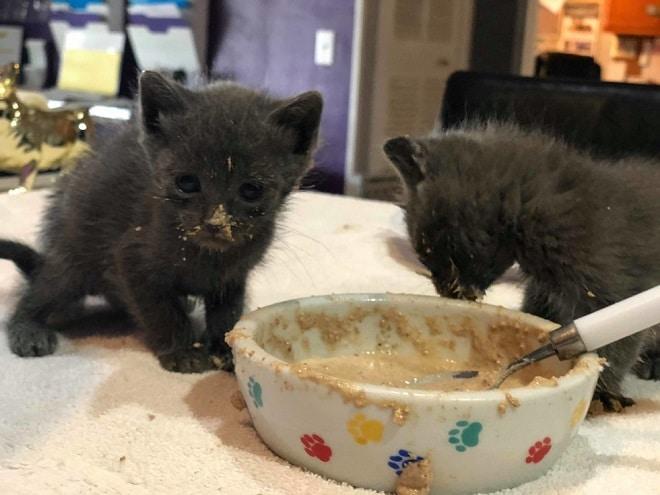 Котята кушают