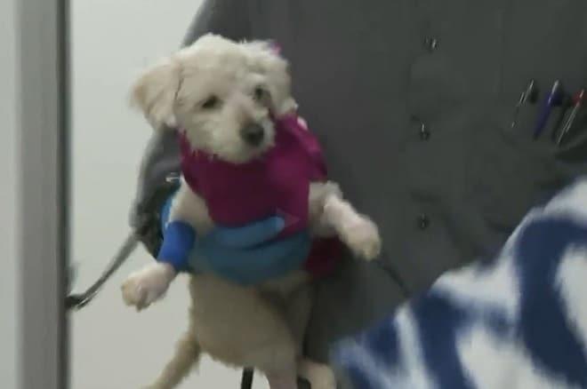 Собачка на руах