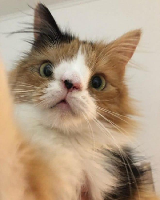 Кошка с болезнью